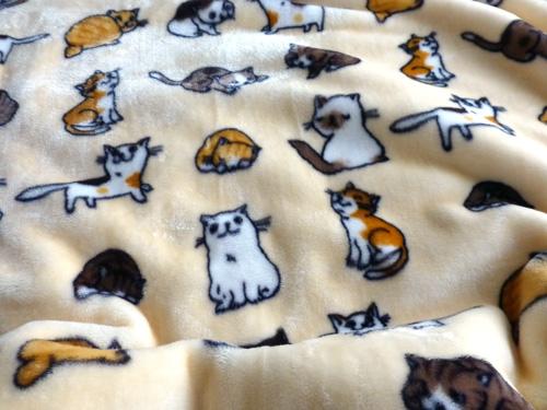 猫毛布.jpg
